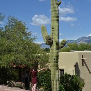 San Diego - Tucson - Dag 10 - Foto