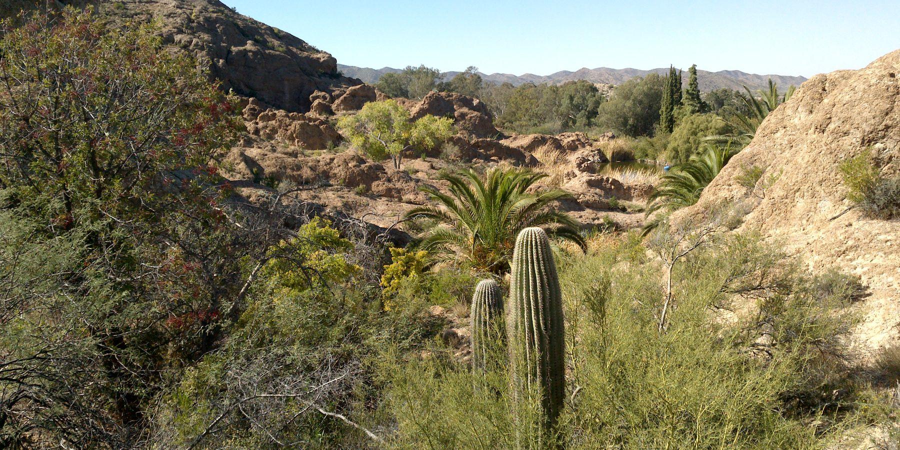Boyce Thompson Arboretum - Phoenix - Arizona - Doets Reizen