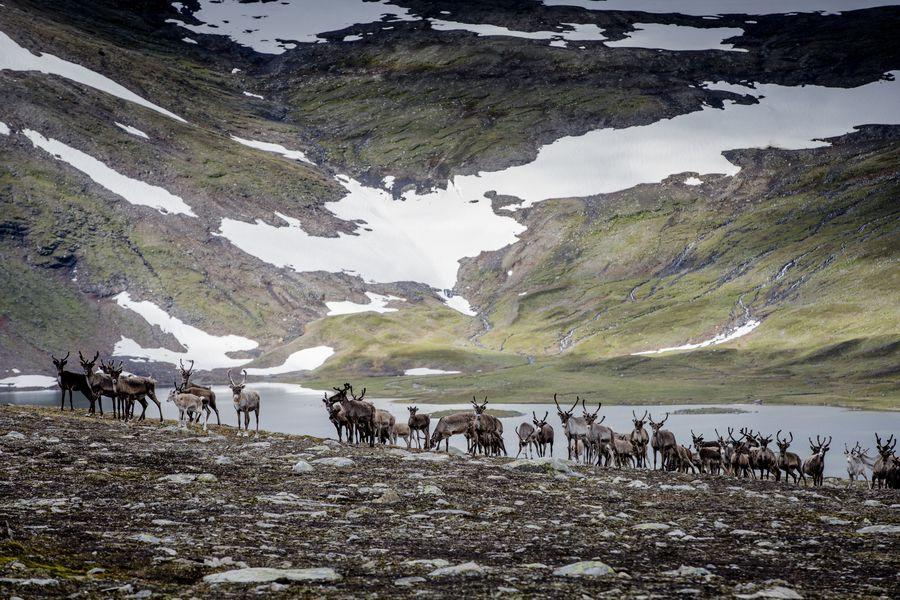 Zweeds Lapland- Doets Reizen - Vakantie Zweden - Credits SwedishLapland.com