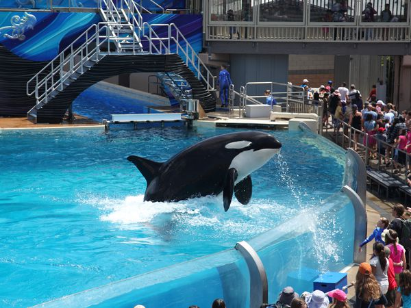 Seaworld in San Diego, California