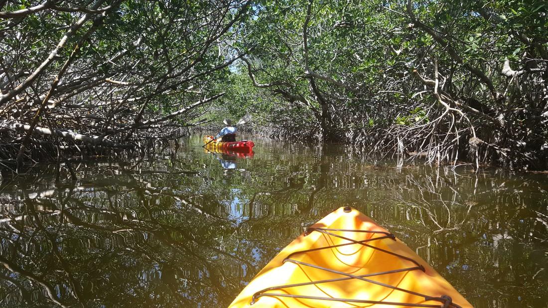 Kayak Tour Key Largo - The Keys - Florida - Doets Reizen