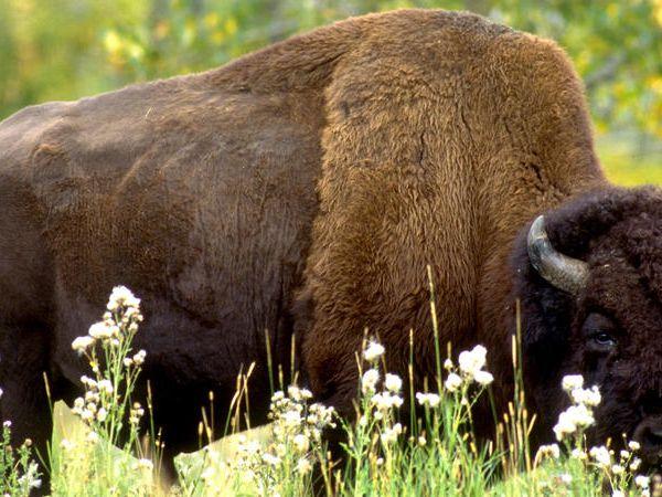 Elk Island National Park - Alberta - Canada - Doets Reizen