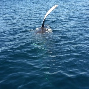 Walvis spotten - Dag 4 - Foto