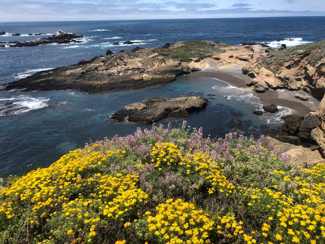 Point Lobos - Big Sur - Highway 1 - California - Amerika - Doets Reizen