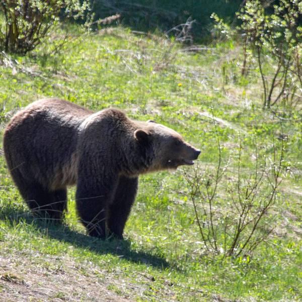 Lake Louise wildlife- Banff National Park - Alberta - Canada - Doets Reizen