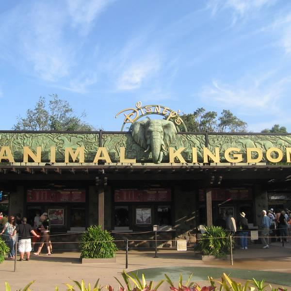 Animal Kingdom Orlando Florida