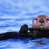 Priscilla Melse - Sea Otter