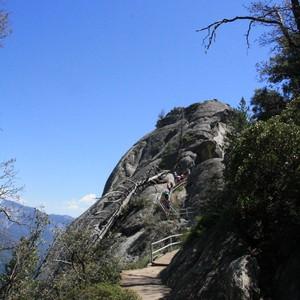 Seqouia's en een hoge rots - Dag 5 - Foto