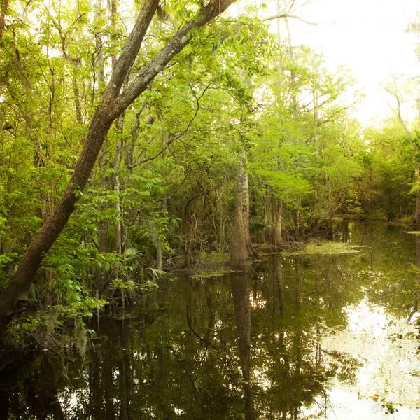 Swamp Tour - New Orleans - Lousiana - Amerika - Doets Reizen