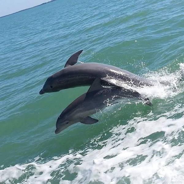 Sanibel & Captiva Island Florida