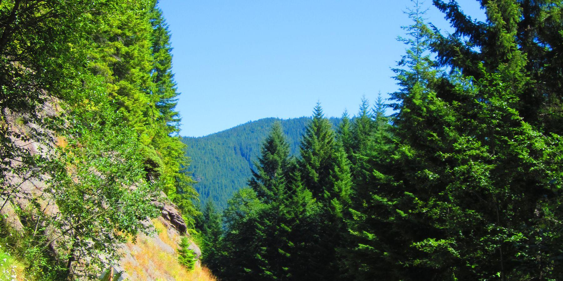 Quinault - Washington State - Doets Reizen