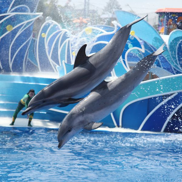SeaWorld Orlando Florida USA