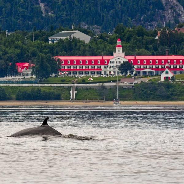 Hotel Tadoussac - whale