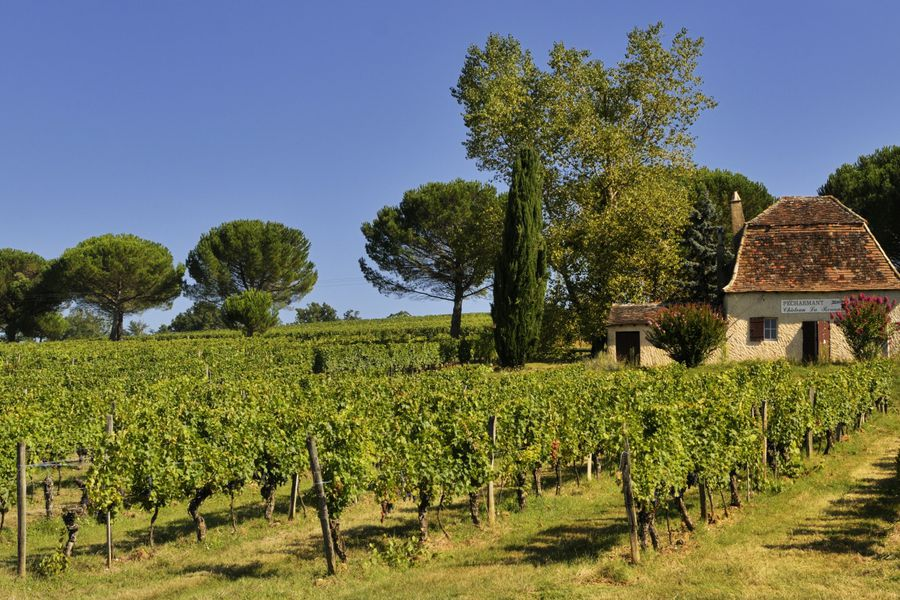 Dordogne wijnvelden credits Atout France | Doets Reizen | Frankrijk