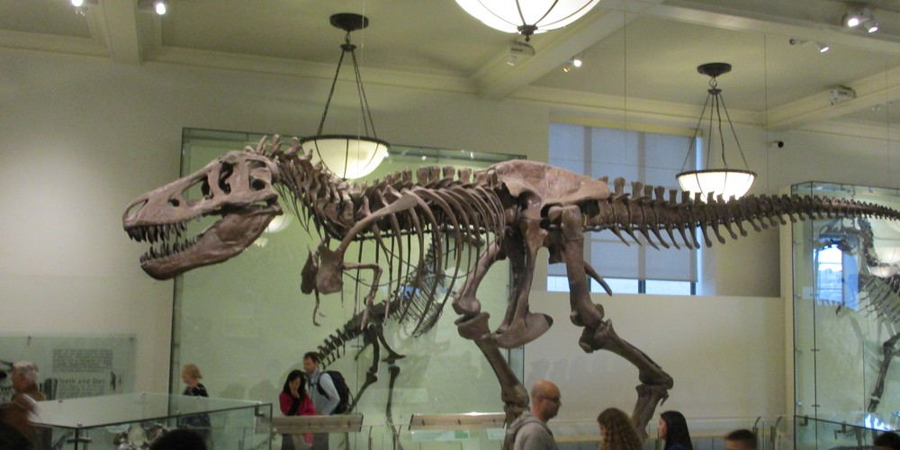 American Museum of National History - New York - Doets Reizen