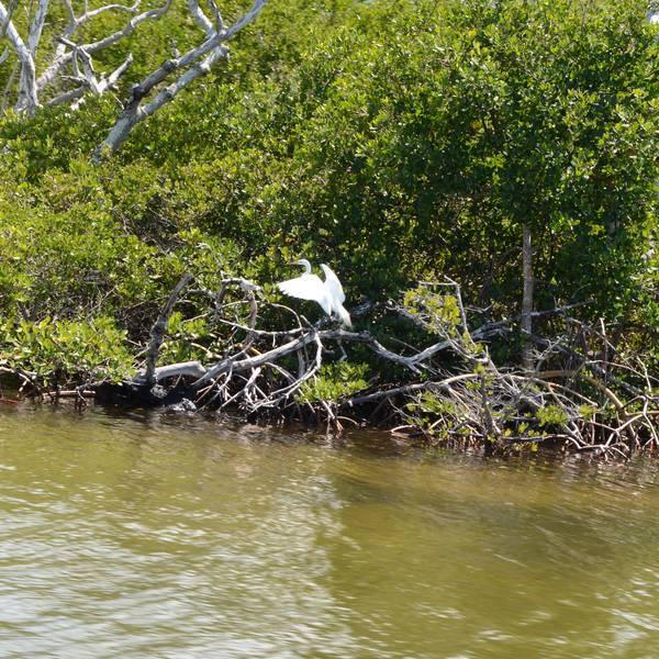 Boottocht vanuit Captiva Island Florida