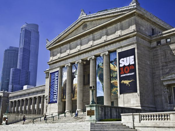 The Field Museum - Chicago - Illinois - Doets Reizen