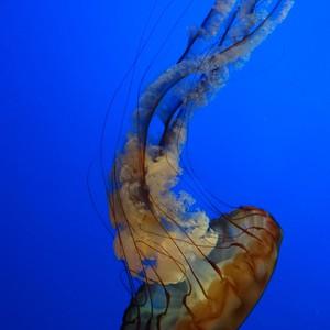 Monterey, aquarium - Dag 5 - Foto