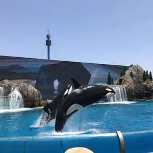 Sea world! - Dag 10 - Foto