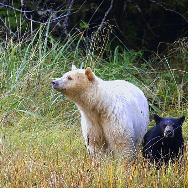 Spirit Bear Lodge - Canada - 2