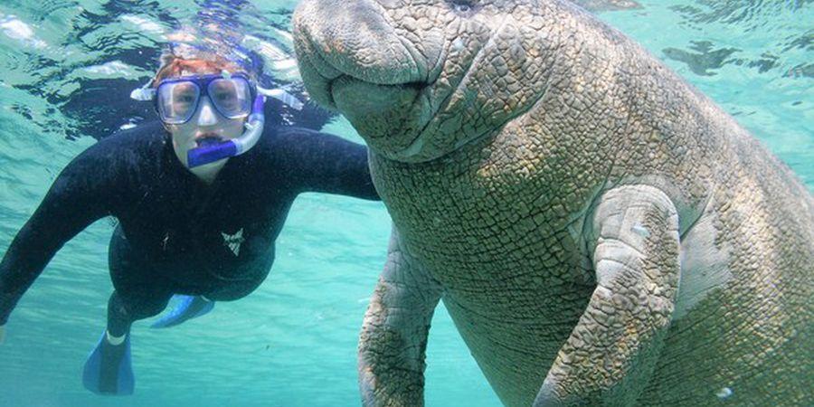 Zwemmen met zeekoeien - Crystal River - Florida - Doets Reizen