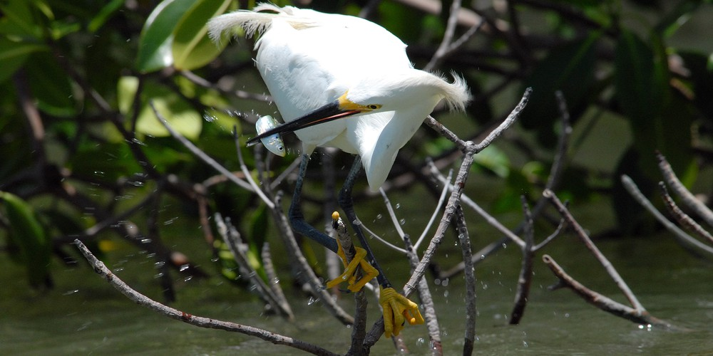 Everglades Birding and Wildlife Tour Florida Amerika