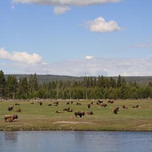 1e dag Yellowstone - Dag 12 - Foto