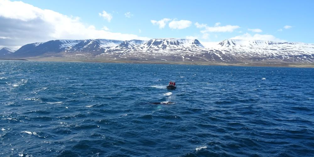 Akureyri - IJsland - Doets Reizen