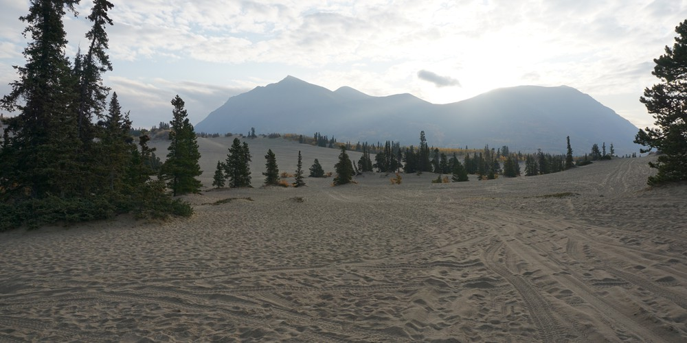 Carcross Desert - Yukon - Canada - Doets Reizen