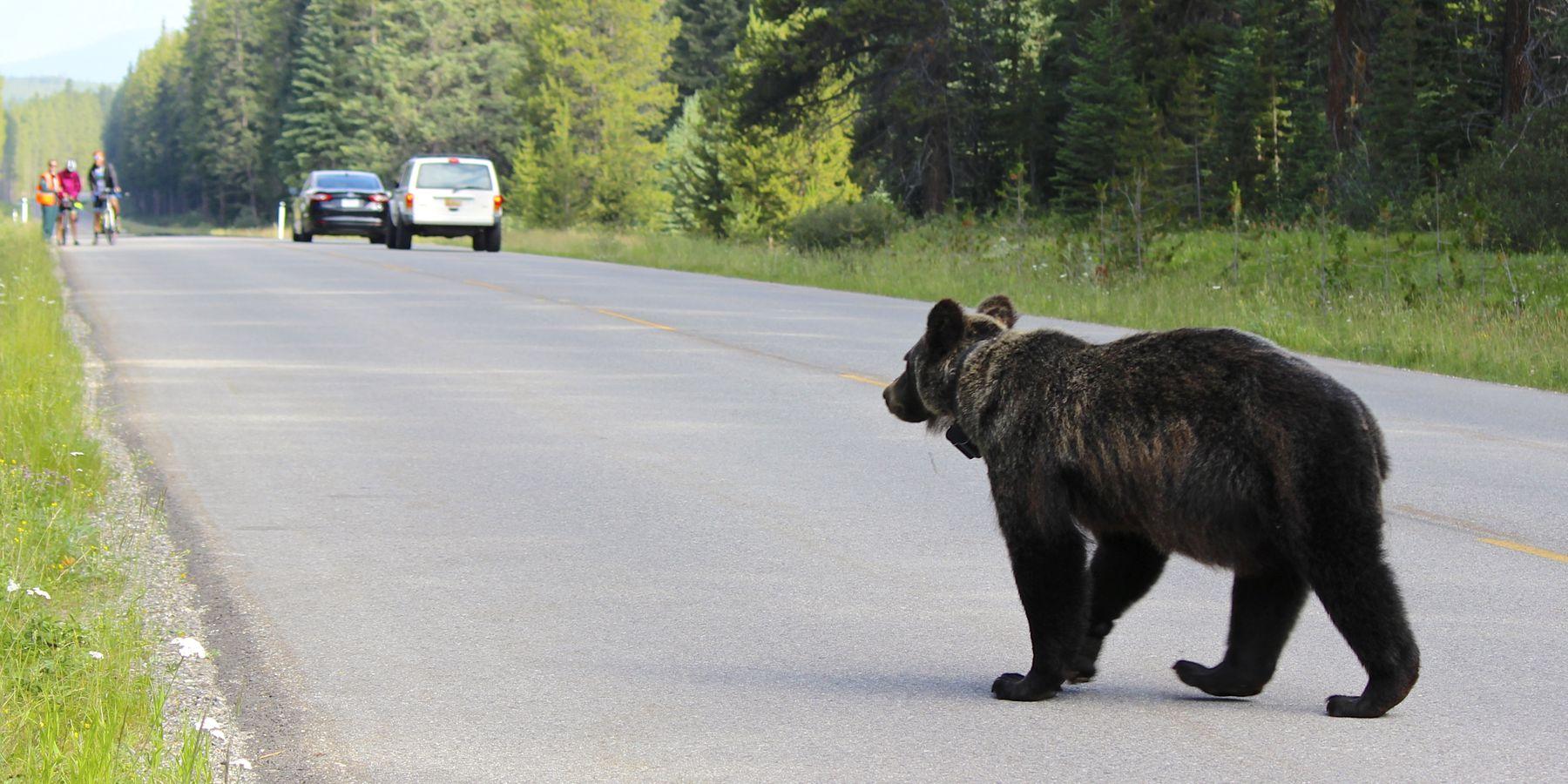 Bow Valley Parkway - Banff National Park - Alberta - Canada - Doets Reizen