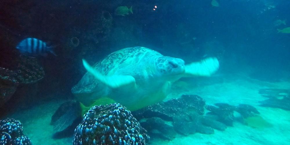 New England Aquarium - Boston - Massachusetts - Doets Reizen