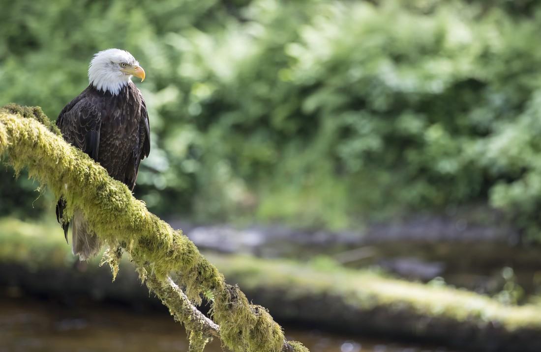 Wildlife British Columbia - Canada - Doets Reizen