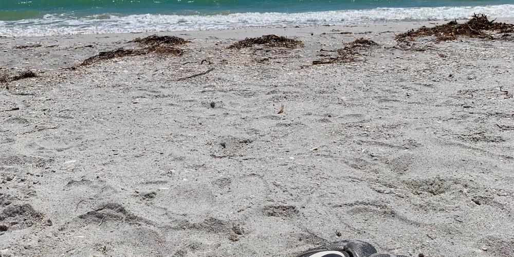 Cayo Costa Halve dag tour - Florida - Doets Reizen