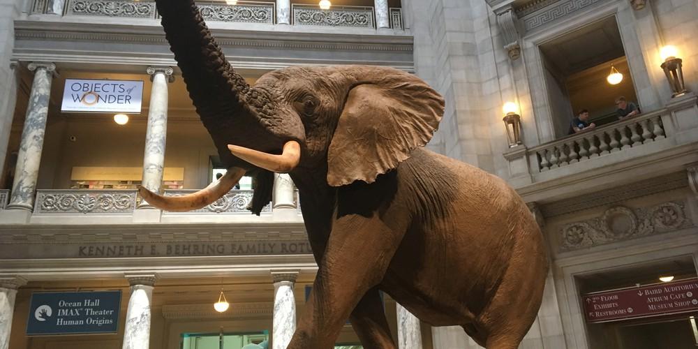Museum of Natural History - Washington D.C. - Doets Reizen
