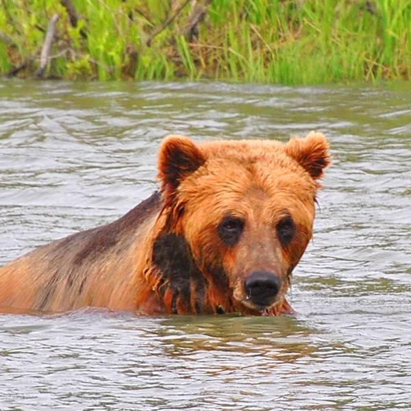 Wildlife Katmai National Park - Alaska - Doets Reizen