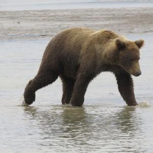 Naar de beren - Dag 3 - Foto