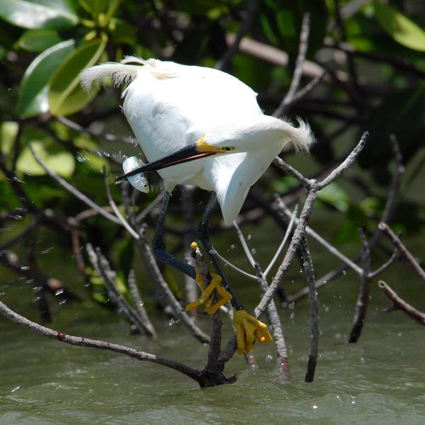 Birding and Wildlife Tour - Everglades National Park - Florida - Doets Reizen