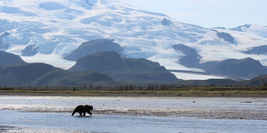 Bear & Wildlife Viewing - Homer - Alaska - Doets Reizen