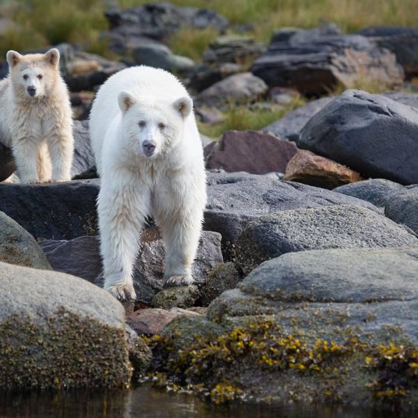 Spirit Bear Lodge - Doets Reizen - 4