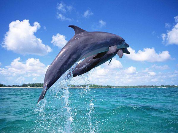 Dolfijnen in Florida