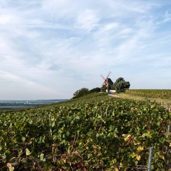 Champagnestreek wijnproeverijen | Frankrijk | Doets Reizen