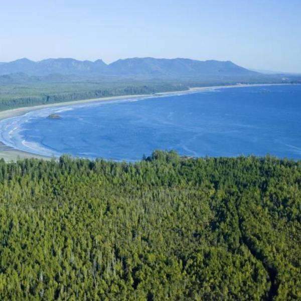 Jamie's Rainforest Inn - luchtfoto