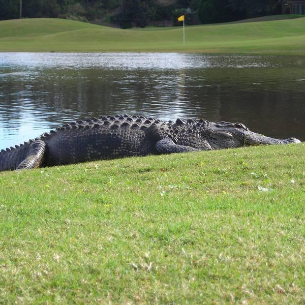Golf - Golfen Florida - Amerika - Doets Reizen
