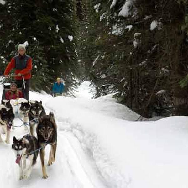 Wintersport - Hondensleetocht - Sun Peaks - British Columbia - Canada - Doets Reizen