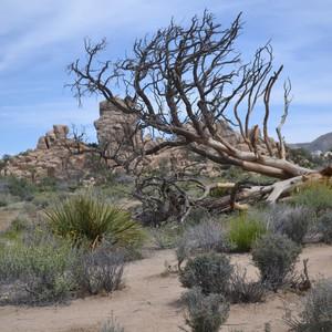 Joshua Tree - Dag 4 - Foto