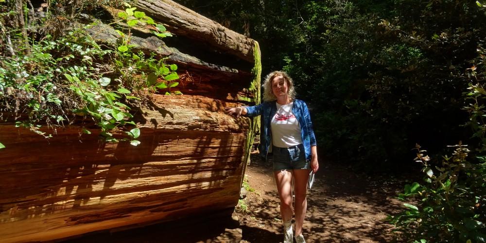 Redwood National Park - California - Amerika - Doets Reizen
