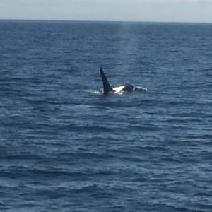 Whales - Dag 14 - Foto