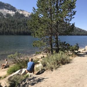 Toch door Yosemite park! - Dag 21 - Foto