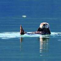 Kim Otter - Baby Sea Otter