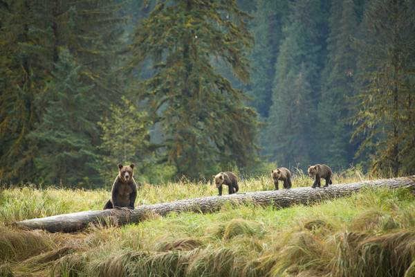 Spirit Bear Lodge - Great Bear Rainforest - British Columbia - Canada - Doets Reizen